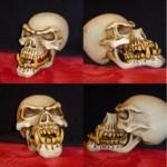 skull_view